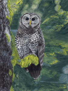 Spotted Owl painting