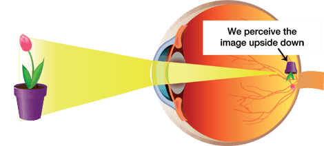 How does the mechanics of Eyesight work?