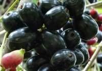 Benefits of Jamun fruit for diabetes | Is black Jamun good for diabetes?