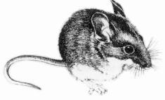 Hantavirus - Diseases and Conditions - Publications - Public ...