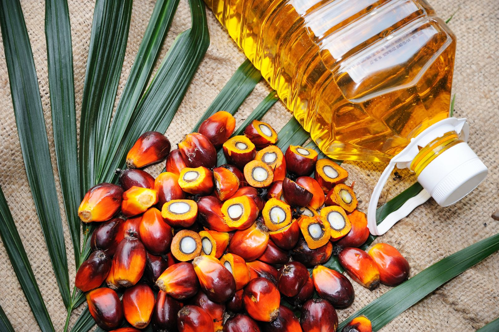 Is Palm Oil Any Good For You? Telugu Food And Diet News