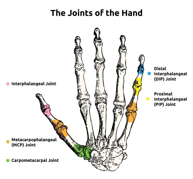 Reverse Finger Knuckle Bender :: Sports Supports