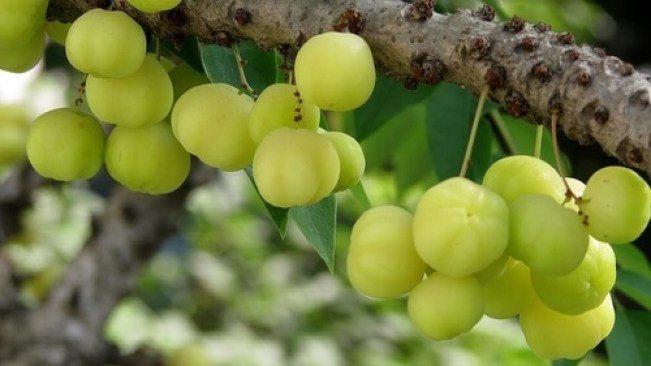 home-remedies-by-amla-indian-gooseberry आंवले