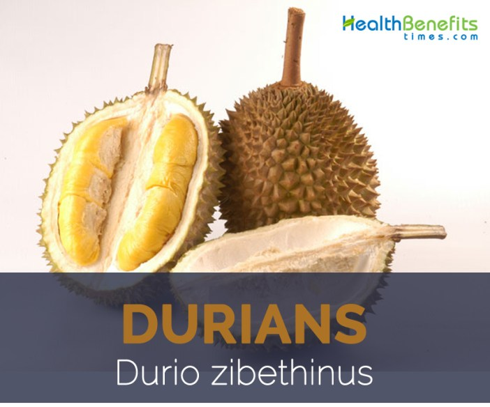 Durians facts and health benefits