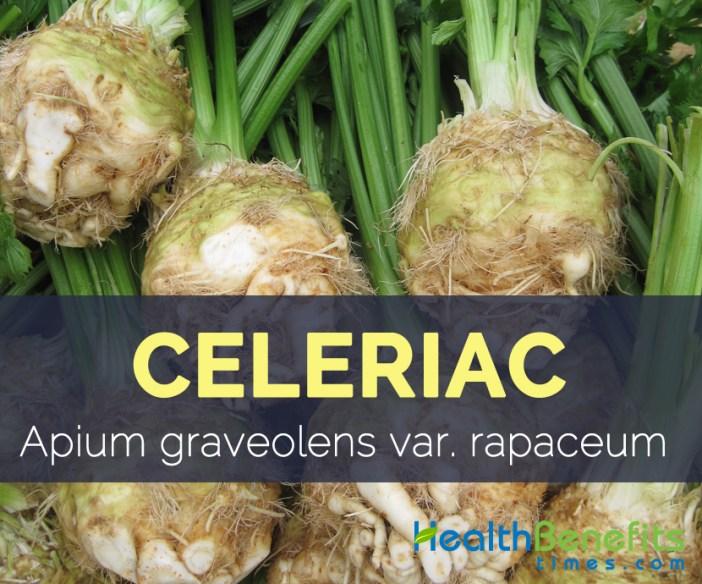 Celeriac - Apium graveolens var. rapaceum