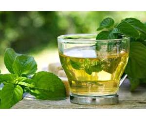 Health benefits of Boldo Tea