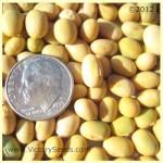 Bei Liang 11 Soybean