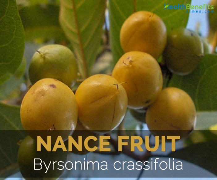 nance-fruit-byrsonima-crassifolia