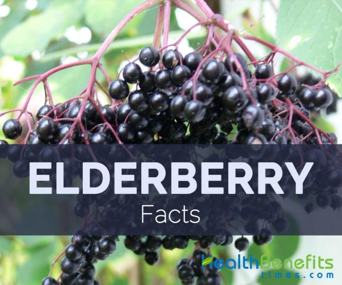 Elderberry Facts