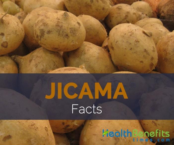 Jicama Facts