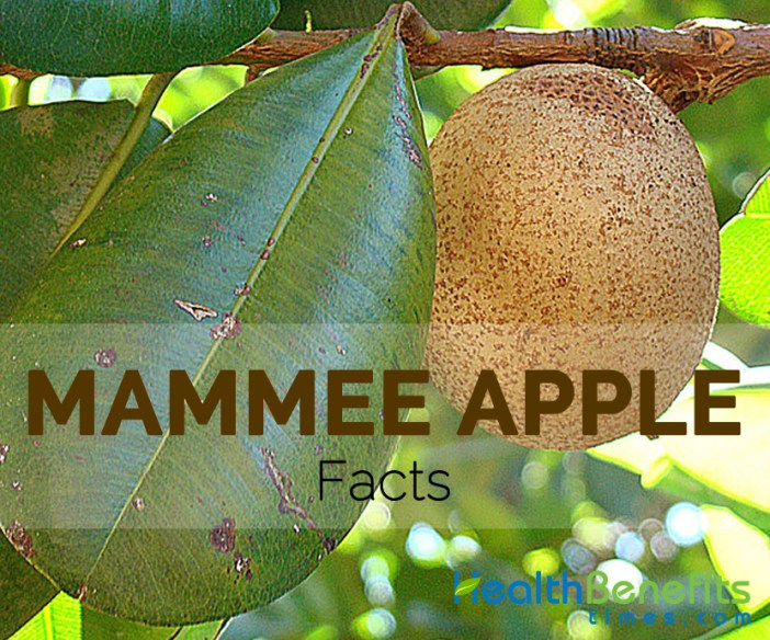 Mammee Apple Facts