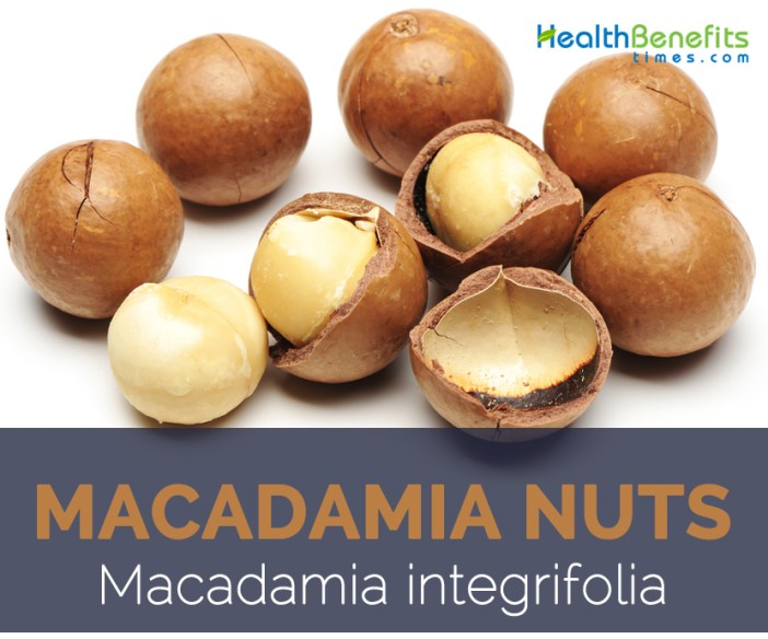 Macadamia nuts facts and health benefits