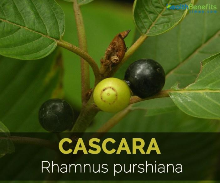 cascara-rhamnus-purshiana
