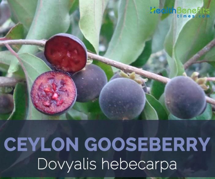 Ceylon gooseberry facts and health benefits