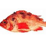 Dark blotched Rockfish