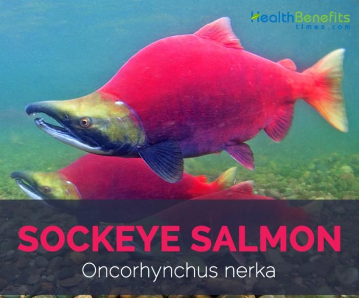 Sockeye salmon facts and health benefits