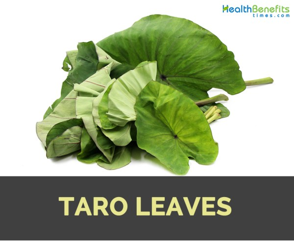 Taro Leaves Facts Health Benefits and Nutritional Value
