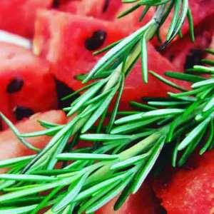 watermelon_500x500