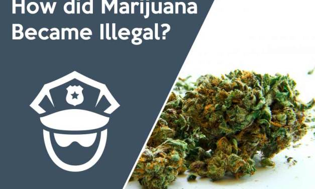 How did Marijuana Become Illegal?