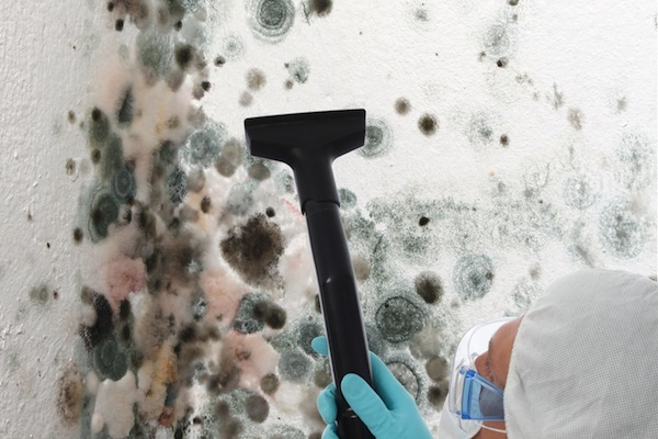 Eliminate Mold for Good with Any of These Really Simple