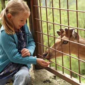 Girl Feeding Deer