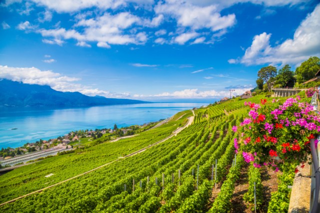 Beautiful scenery with vineyard terraces in famous Lavaux wine region, UNESCO World Heritage Site since 2007, overlooking the northern shores of Lake Geneva, Canton of Vaud, Switzerland