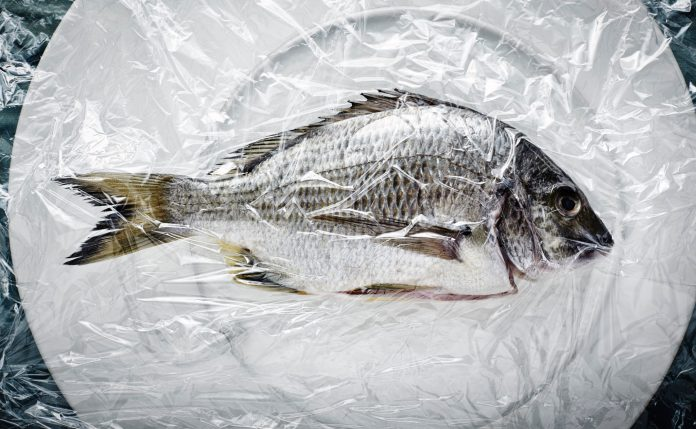 fish with the highest amounts of mercury