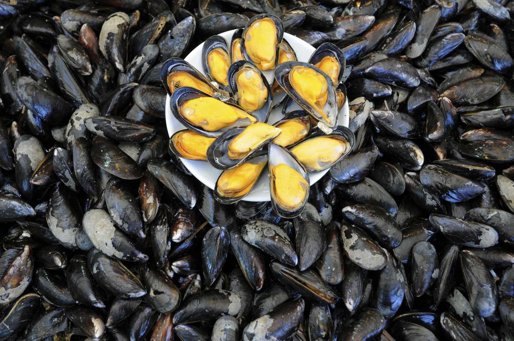 Useful properties of mussels for our body