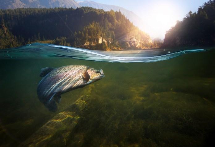 health benefits of fishing