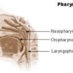 pharynx