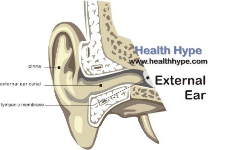 Outer Ear Parts External Ear Anatomy Diagram and