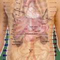 Pain under right rib cage healthhype com