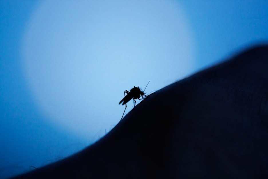 Mosquitoes. Vector-borne diseases concept.
