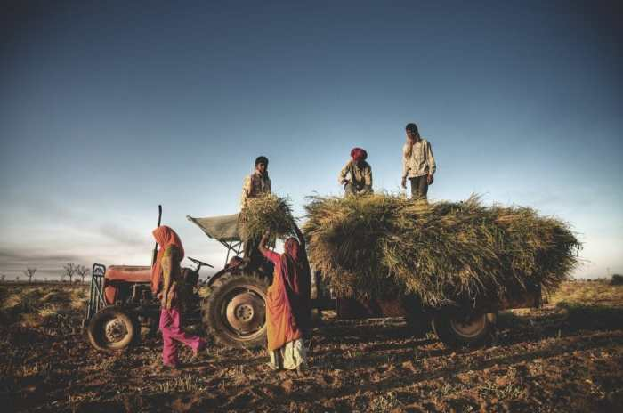 Indian farm labourers. Copyright: <a href='https://www.123rf.com/profile_rawpixel'>rawpixel / 123RF Stock Photo</a>
