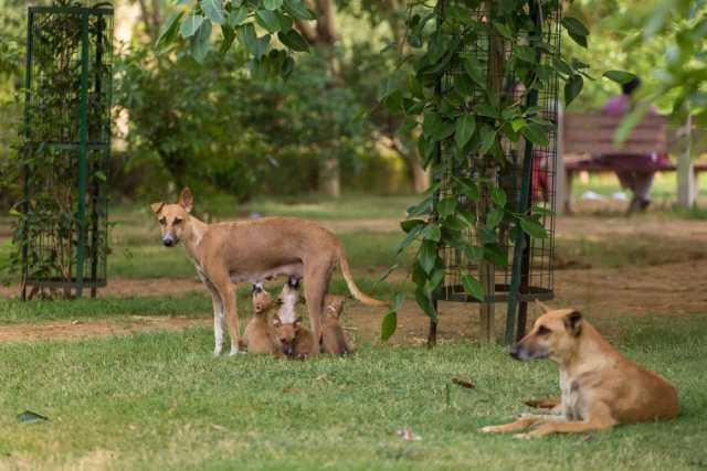 Stray dogs, rabies. Aliaksandr Mazurkevich