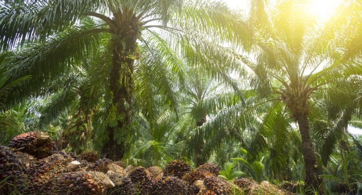 Turn away from trans fats, but don't look to palm oil