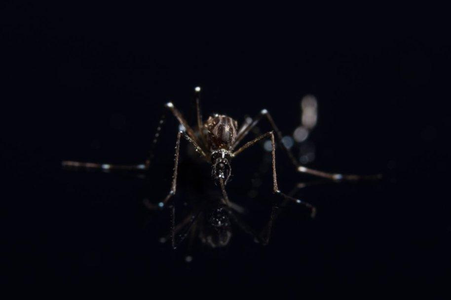 Mosquito Macro Background on Black Mirror