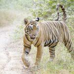 Image credit: andreanita / 123rf endangered species concept.