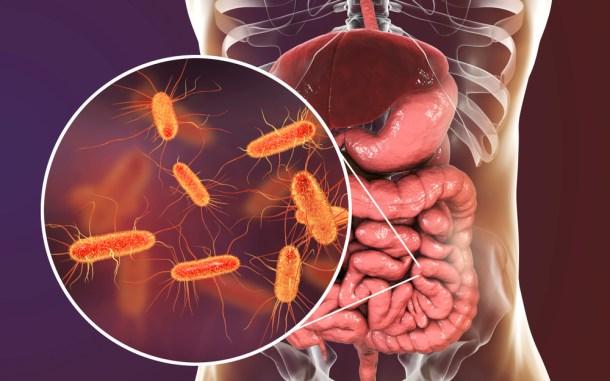 improve gut health