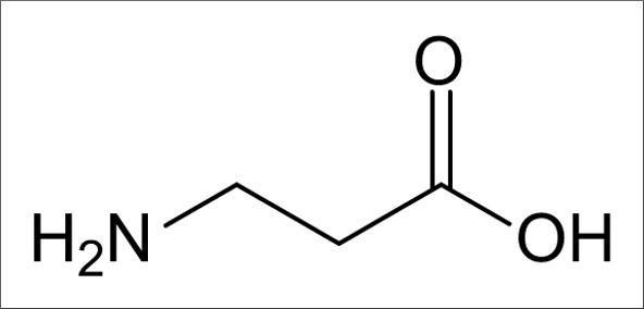 Beta-Alanine — A Beginner's Guide