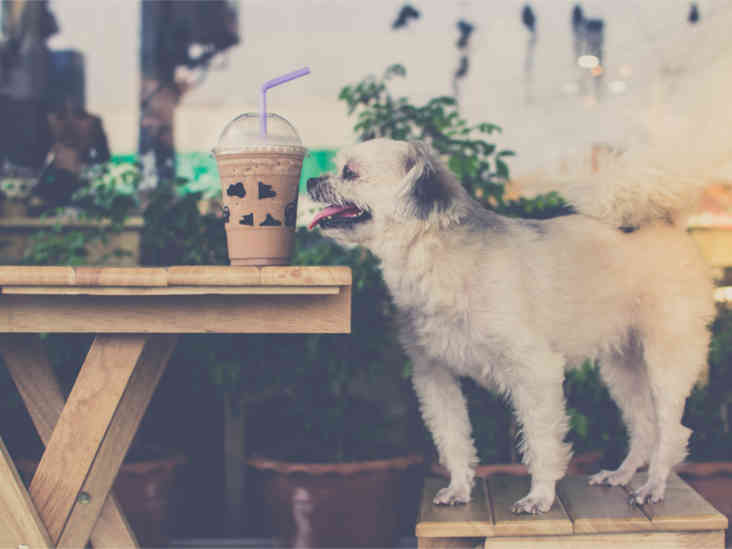 7 Human Foods That Can Be Fatal To Dogs