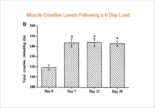 muscle creatine levels