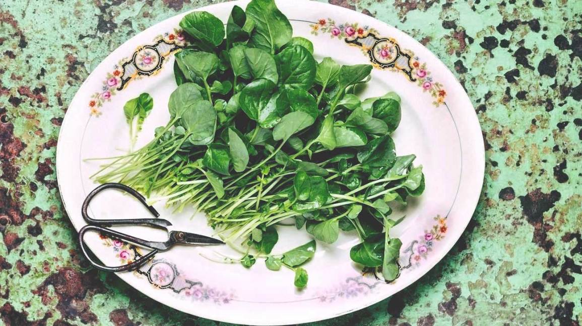 Growing persian cress