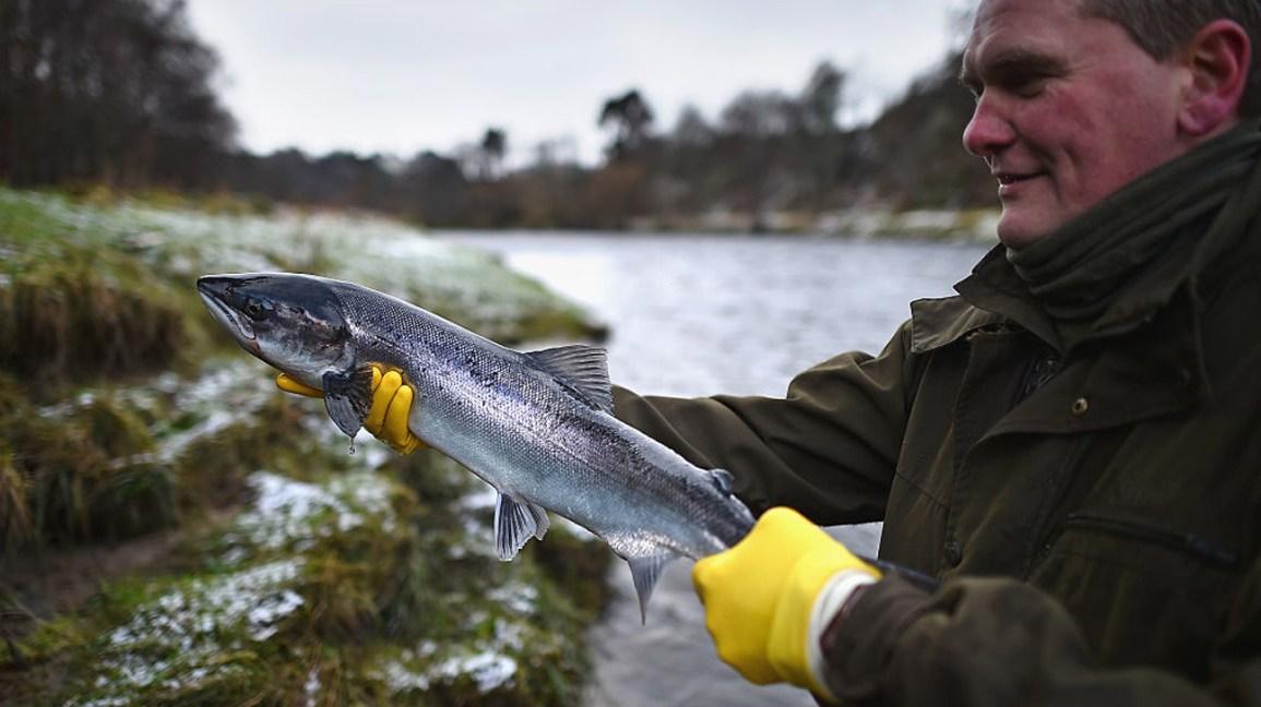 Wild vs Farmed Salmon: Which Type of Salmon Is Healthier?