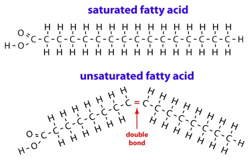 Bonds of Fatty Acids Graph