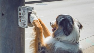 Service Dogs Help People With More Than Blindness