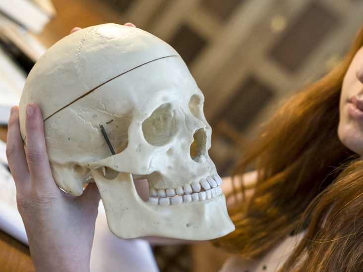 Skull Pictures Anatomy Diagram Body Maps