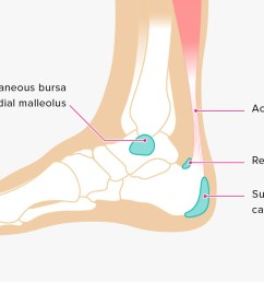 ankle tendon diagram [ 1296 x 728 Pixel ]