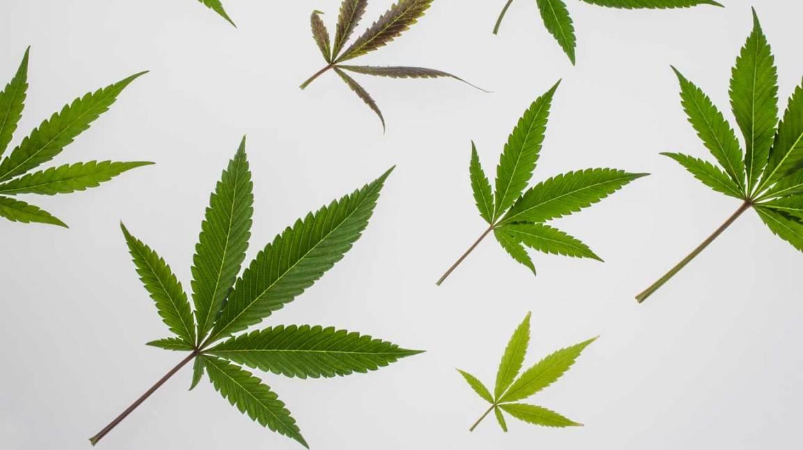 marijuana cannabis and multiple sclerosis