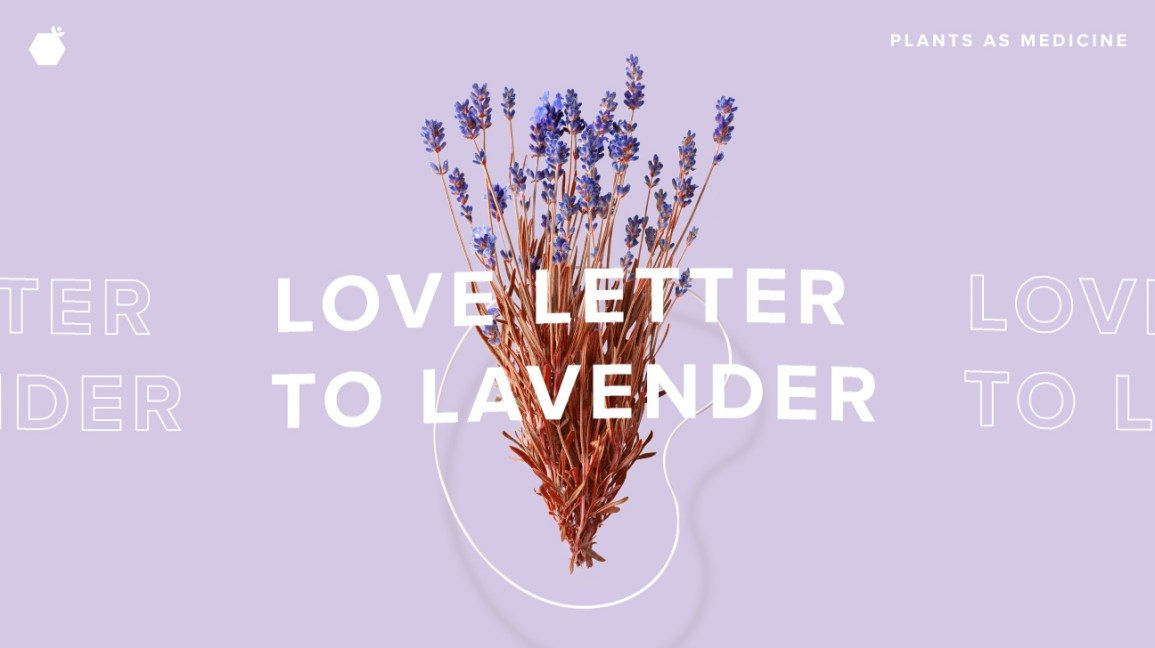 A Love Letter to Lavender
